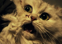 Кот / The Cat: Eyes that Sees Death (2011)